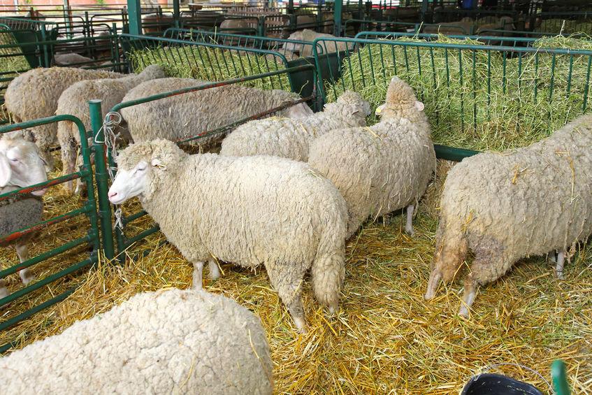 """вівці Засіб """"Альфа і омега комфорт"""""""
